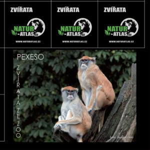 pexeso_zvirata-v-zoo-1